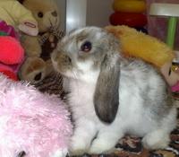 Почему декоративный кролик лижет руки и ноги